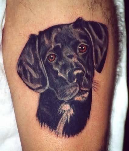 Black Dog Face Tattoo on Biceps