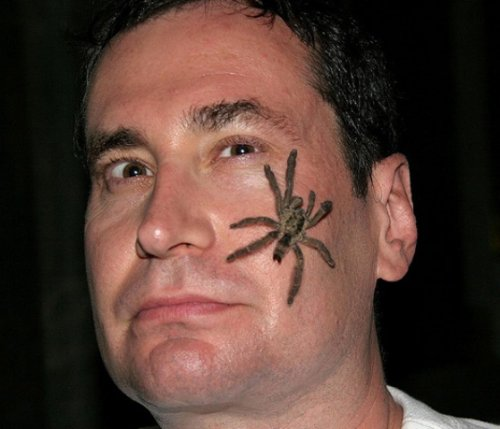 Grey Ink Spider Face Tattoo For Men