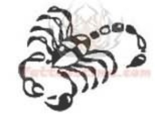 Scorpio Tattoo Design