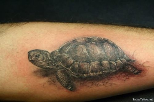 Black Ink Turtles Tattoo