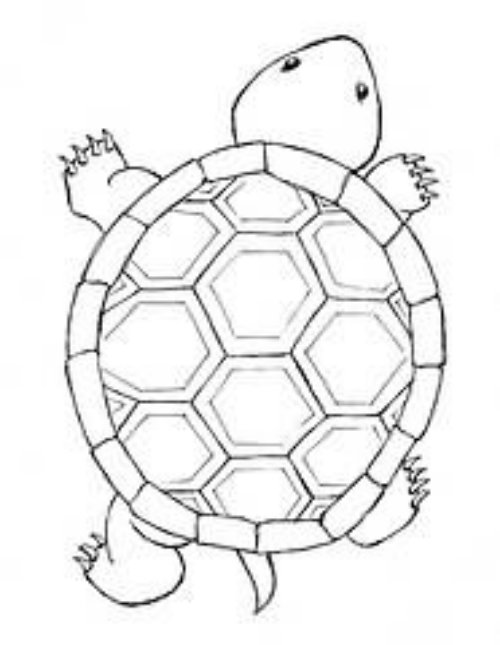 Turtle Tattoo Designs For Body Art
