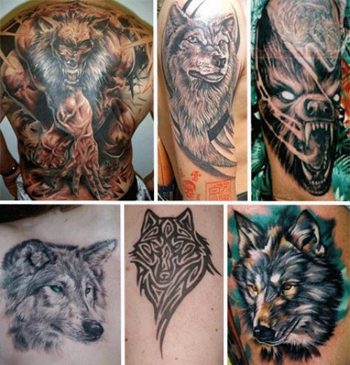 Wildlife Wolf Tattoos Collection